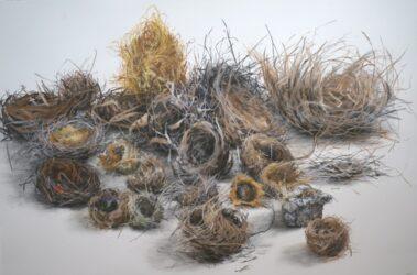 23 nests
