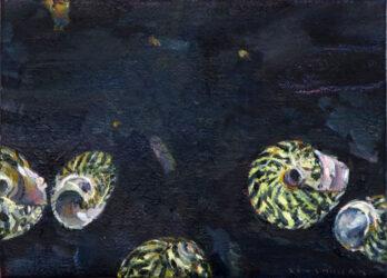 Sea snails III
