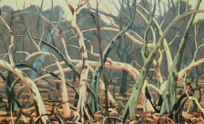 After the fires, landscape with Raper's robin