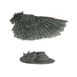 Woodswallow wing