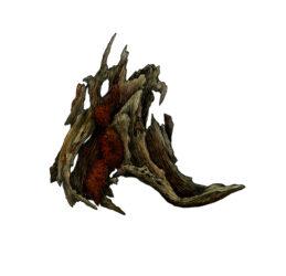 Mulga root