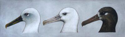 Albatross heads