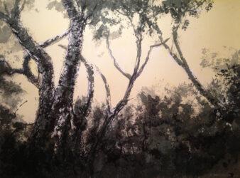 Banksias at dusk