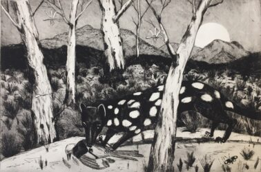 Landscape with Lesueur's quoll