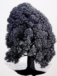 Tree – Bogong