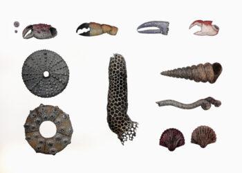Ocean fragments