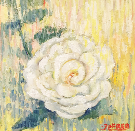 Ode to the white rose #3 – midday