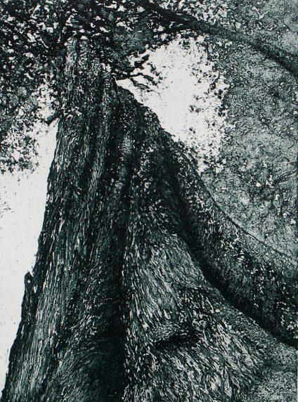 Log forest 3 – Twisted sister, Florentine, Tasmania