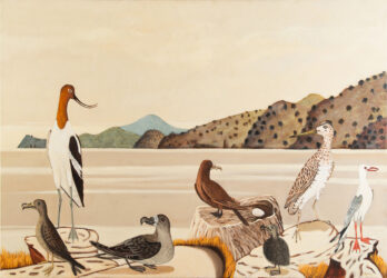 Colonial seabirds