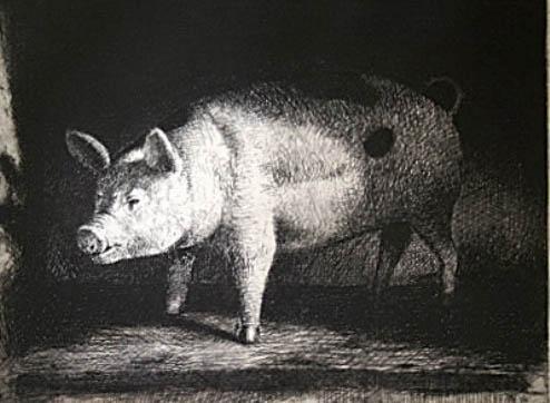 The plastic pig