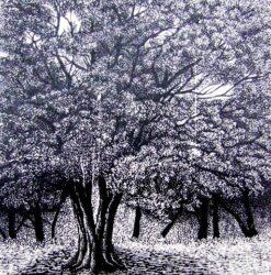 Arboretum – Bogong