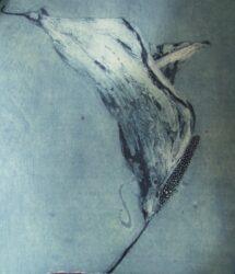 Flutter (medium)