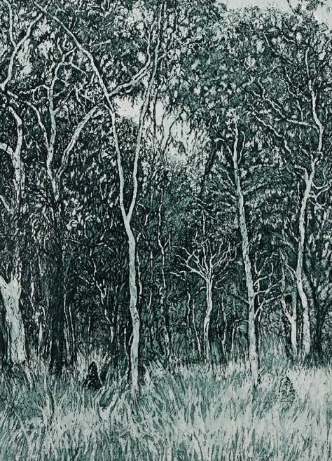 Log forest 6 – Bimblebox Nature Refuge,  Queensland