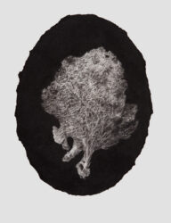 Oval portrait sponge
