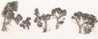 White Cypress – Mungo