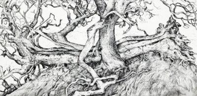 Viking tree, Sweet Chestnut