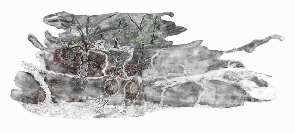 Dhuŋguruk, Butjuwutju/Mona and Djitama – edible tubers of East Arnhem Land