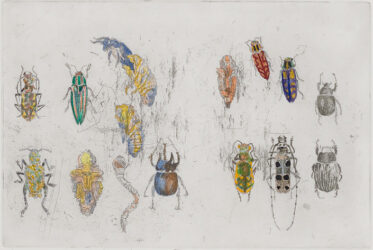 101 Insect Life Stories No.40: Coleoptera