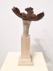 Nature trophy (cranium)