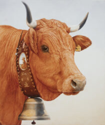 Tarentaise Cow