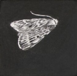 Moth #5