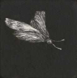 Moth #14