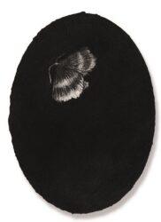 Oval Portrait Moth