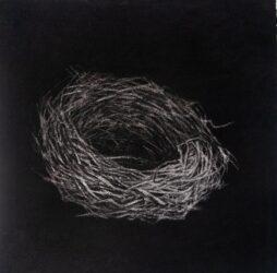 Nest #9