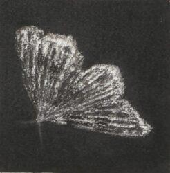 Moth #15