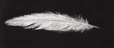 Feather #16