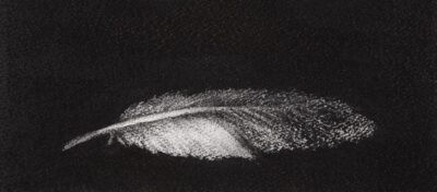 Feather #28
