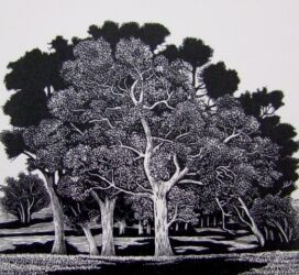 Trees – Sutton Grange