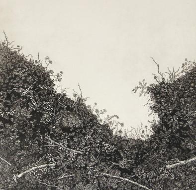 Spurlings hedgerow