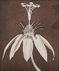 Plant Form II