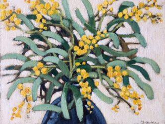 Acacia Pycnantha (golden wattle, floral emblem of Australia)