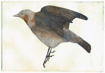 Chestnut-cheeked starling