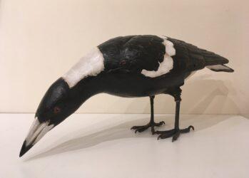 Republican icon #175 (magpie)