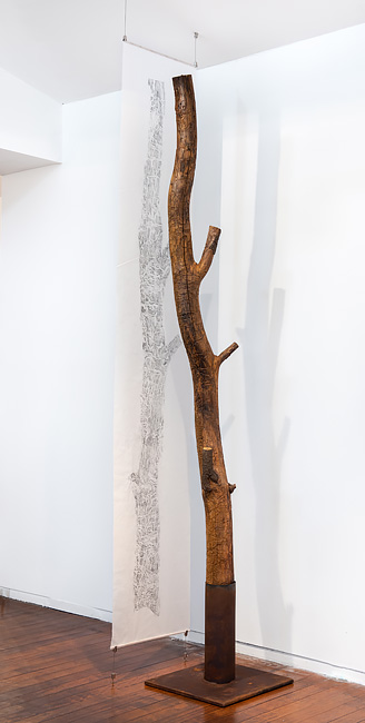 Black wattle tree trunk from Sawpit camp with suspended drawing