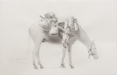 Study for 'Equine Impedimenta' – Tully's Burden (off side view RH)