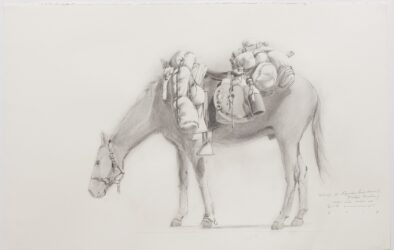Study for 'Equine Impedimenta' – Tully's Burden (near side view LH)