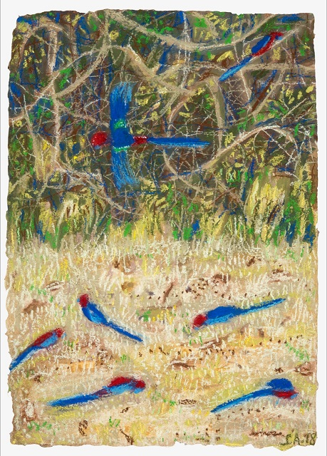 Rosellas grassy patch
