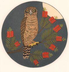 Rufous owl & callistemon