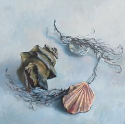Sharks egg and shells