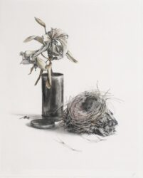 Study for, Wilted flowers