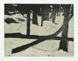 Fallen trees, snow