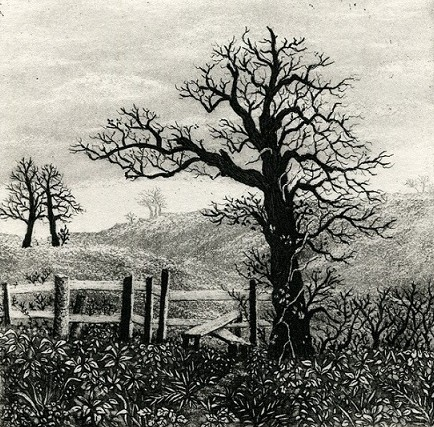 Old tree and stile