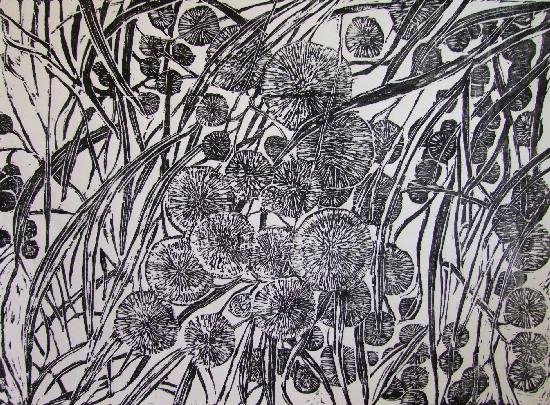 Flowering wattle at noon