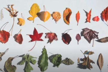 Jennifer Keeler-Milne – 'Autumn Reflections'