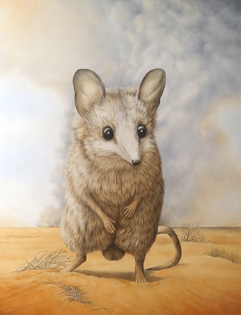 Fat Tailed Dunnart – Under Siege