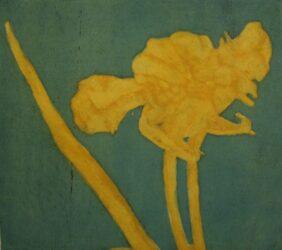 Wilted tulip study II